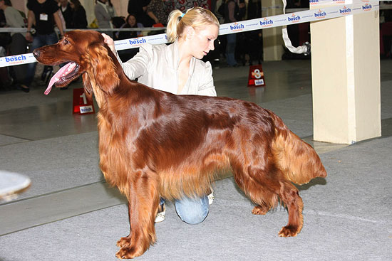 FCI group VII - Winners of the International dog show in Kotka (Finland), 15 - 16 August 2015